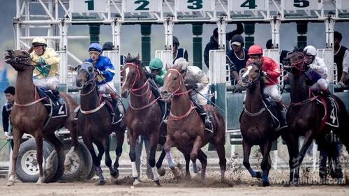 赛马图片3_nEO_IMG.jpg