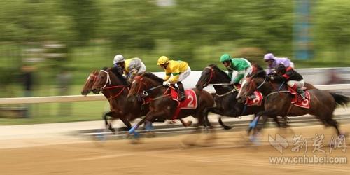 赛马图片4_nEO_IMG.jpg