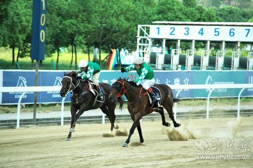赛马图片5_nEO_IMG.jpg