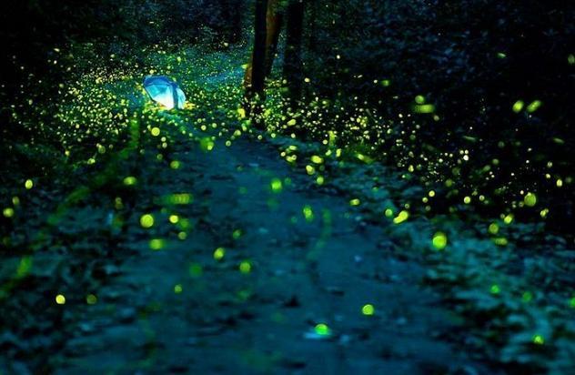 不时有萤火虫飞到大家的肩头,手心,尾部一闪一闪,分外可爱.